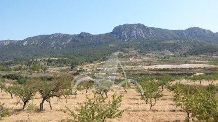 Chalet independiente, Situado en Hondón de los Frailes Alicante 10