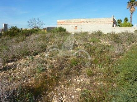 Terreno, Situado en San Fulgencio Alicante 4