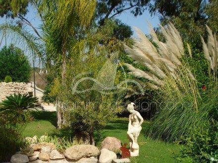 Finca, Situado en Elche Alicante 14