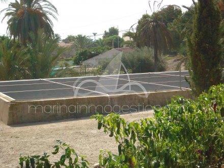 Finca, Situado en Elche Alicante 18