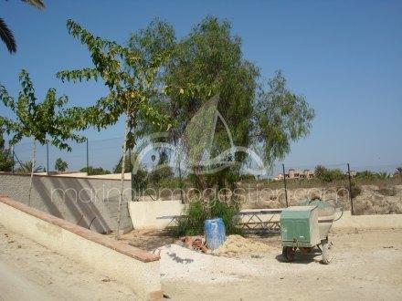 Finca, Situado en Elche Alicante 19