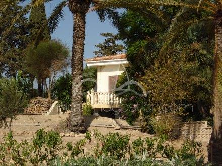 Finca, Situado en Elche Alicante 21