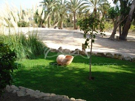 Finca, Situado en Elche Alicante 22