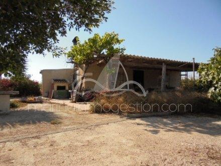 Finca, Situado en Elche Alicante 13