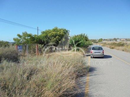 Finca, Situado en Elche Alicante 16
