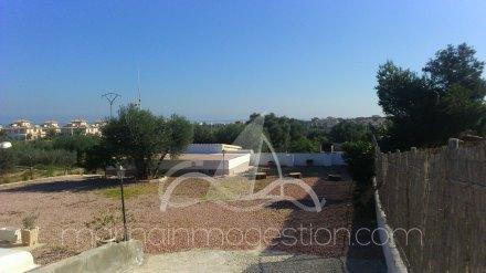 Finca, Situado en Elche Alicante 3