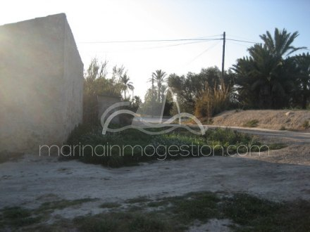 Finca, Situado en Elche Alicante 6