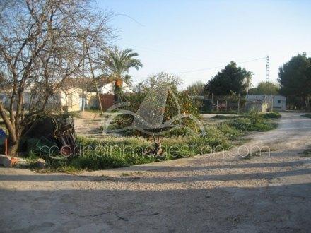 Finca, Situado en Elche Alicante 20