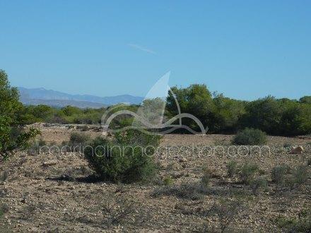 Terreno, Situado en Elche Alicante 7