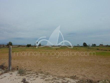 Terreno, Situado en Elche Alicante 10