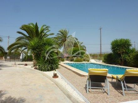 Chalet independiente, Situado en Elche Alicante 4