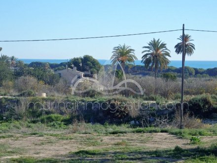 Terreno, Situado en Elche Alicante 12