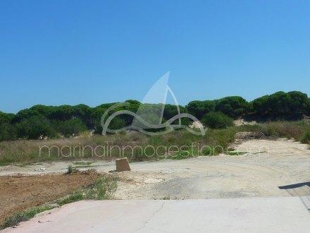 Terreno, Situado en Elche Alicante 8