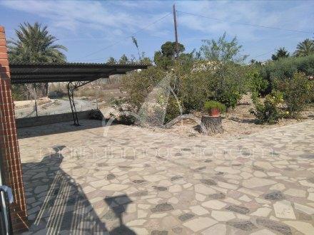 Finca, Situado en Elche Alicante 5