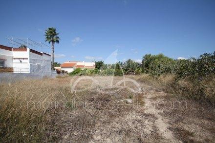 Terreno, Situado en Elche Alicante 2