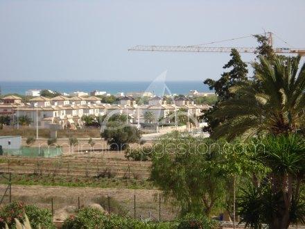 Finca, Situado en Elche Alicante 25