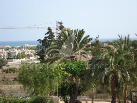 Finca, Situado en Elche Alicante 27