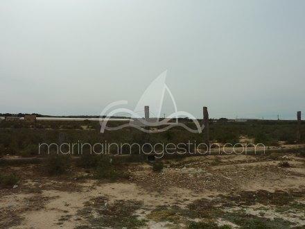 Terreno, Situado en Elche Alicante 4