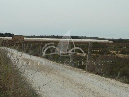 Terreno, Situado en Elche Alicante 5