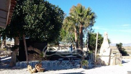 Finca, Situado en Elche Alicante 17
