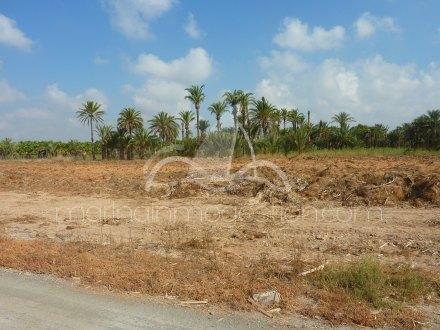 Terreno, Situado en Elche Alicante 1